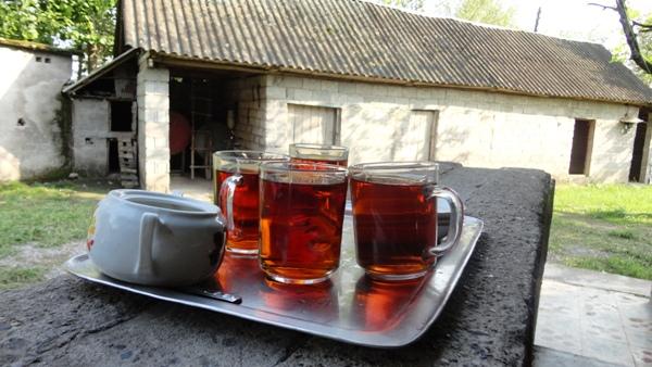 عصر تابستان- چای لاهیجان